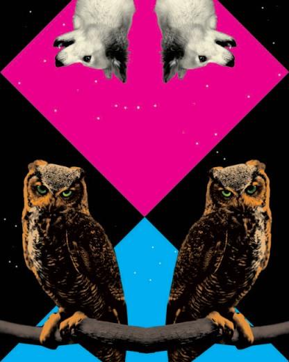 owl2_gluekit.jpg